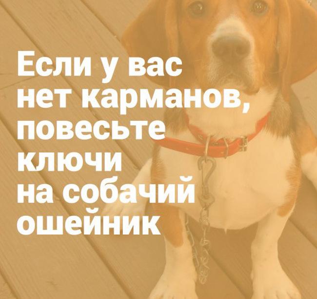 Простые лайфхаки для тех, у кого есть собаки (16 картинок)