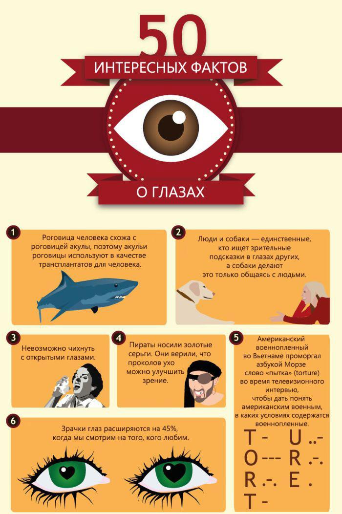 Глаза человека и животных в интересных фактах (6 картинок)