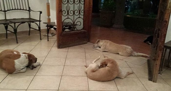 Бродячие собаки пришли попрощаться с кормившей их женщиной (6 фото)