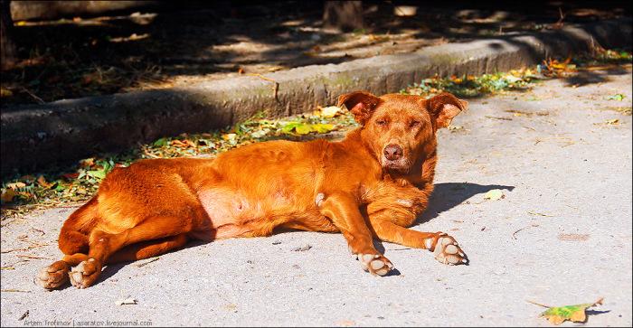 Суд Владивостока вынес приговор Даниле Кислицыну, убившему более 1000 собак (4 фото)