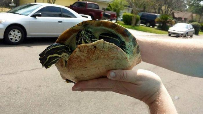 Последствия столкновения спорткара и черепахи (6 фото)