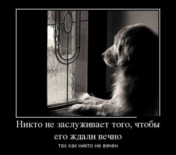http://trinixy.ru/pics5/20150403/demotivatory_08.jpg