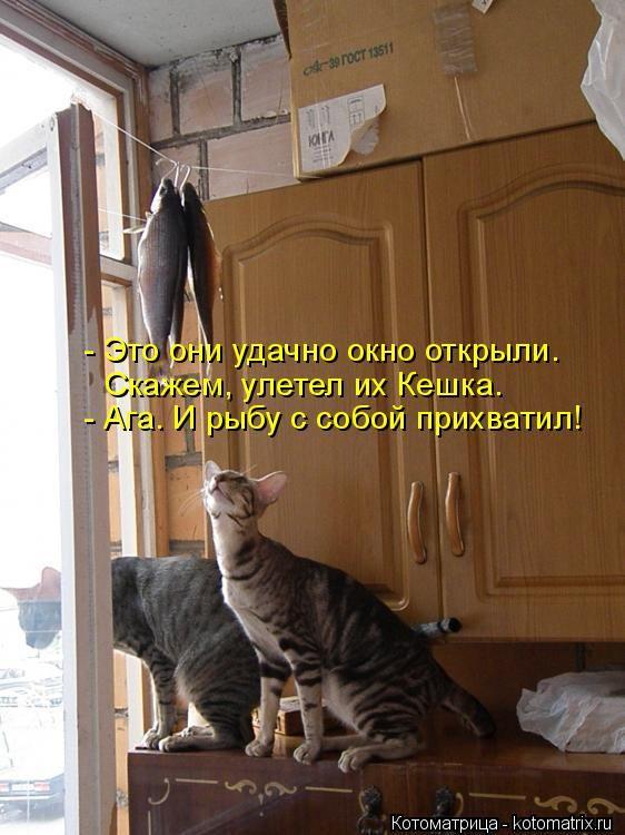 http://cdn.trinixy.ru/pics5/20150403/kotomatrix_14.jpg