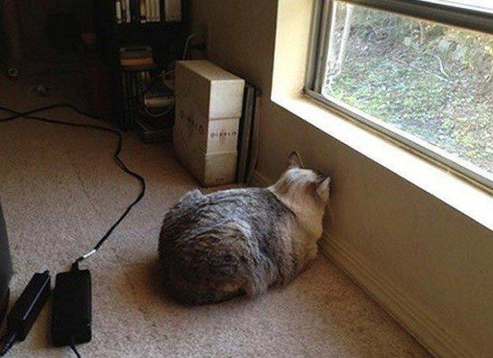 Что значит, если животное уперлось головой в стену (6 фото)