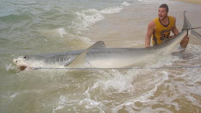 19-летний австралиец поймал 4-метровую тигровую акулу (5 фото)
