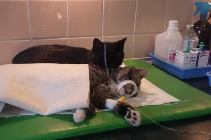 Четвероногий санитар приюта для животных (8 фото)