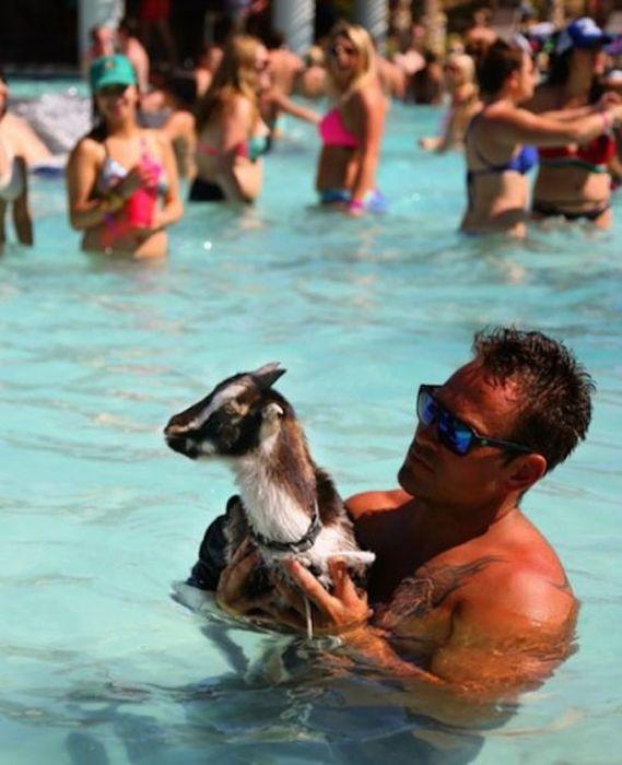 Праздная жизнь американского козлика (11 фото)