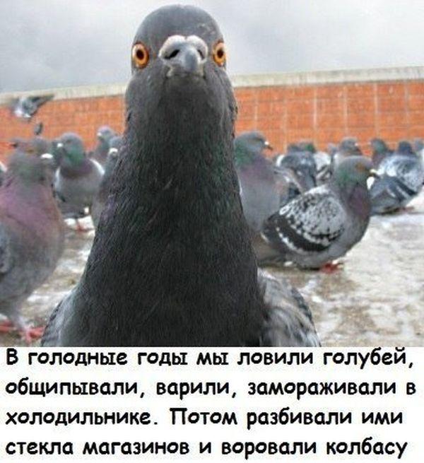 podborka_30.jpg
