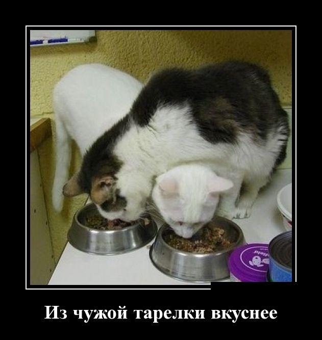 http://trinixy.ru/pics5/20150417/demotivatory_04.jpg