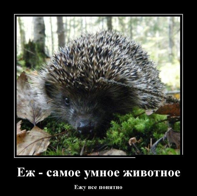 http://trinixy.ru/pics5/20150417/demotivatory_09.jpg