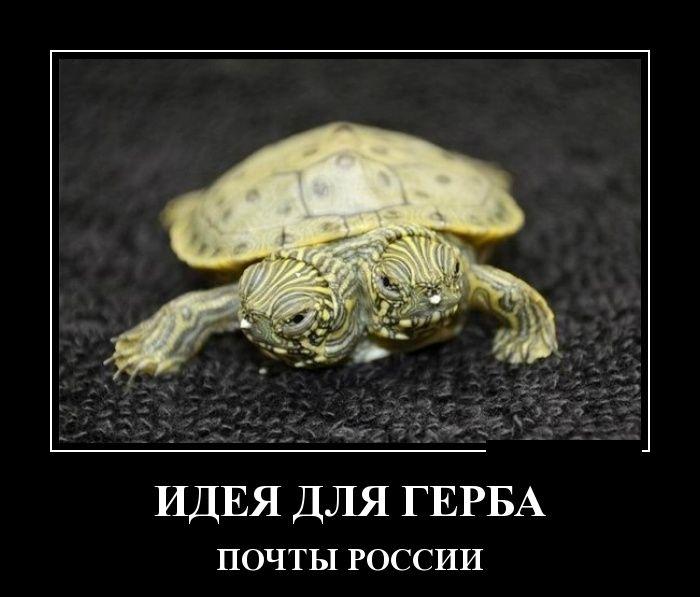 http://trinixy.ru/pics5/20150417/demotivatory_16.jpg