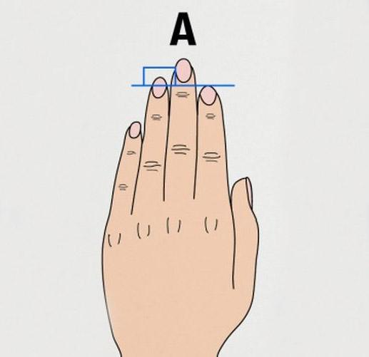 Что может сказать длина пальцев о характере человека (3 фото)