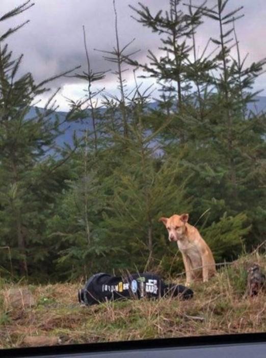 Спасение пса (12 фото)