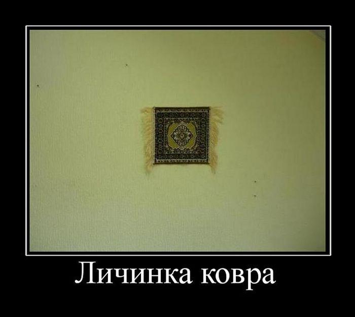http://trinixy.ru/pics5/20150430/demotivatory_02.jpg