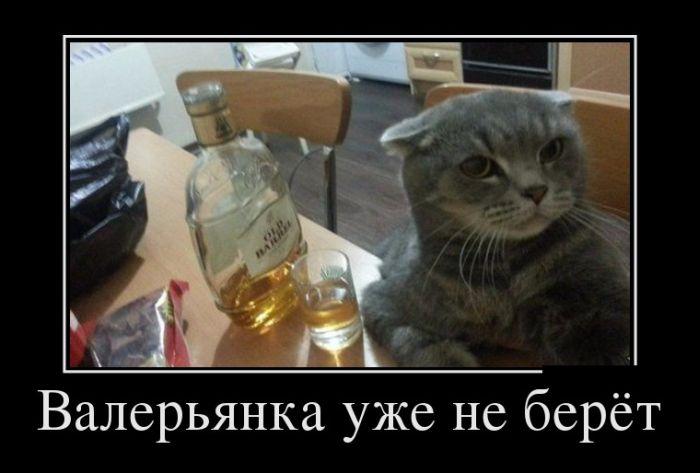 http://trinixy.ru/pics5/20150430/demotivatory_13.jpg