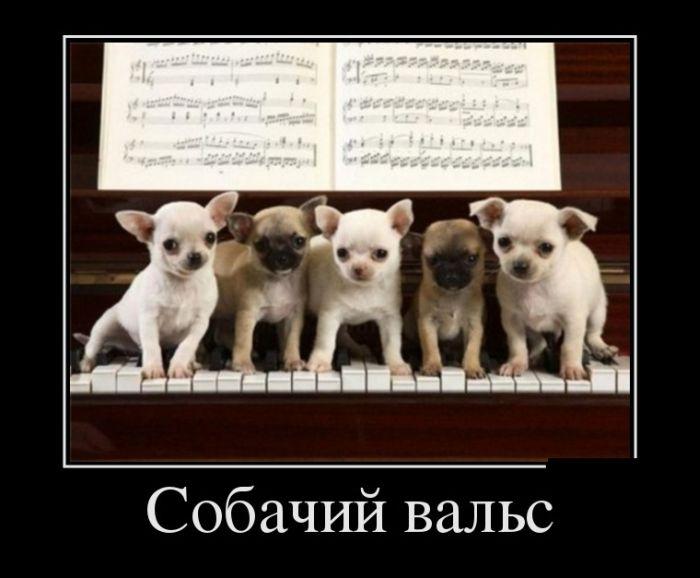 http://trinixy.ru/pics5/20150430/demotivatory_16.jpg