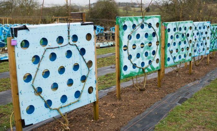 В Великобритании начали выращивать мебель из деревьев (9 фото)