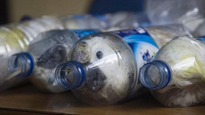 В Индонезии контрабандисты пытались провести через границу редких попугаев в пластиковых бутылках (6 фото)