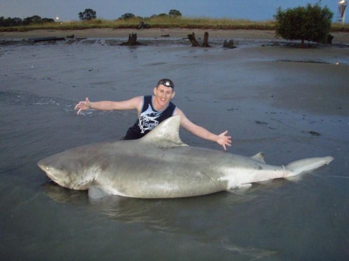 Австралиец голыми руками отбился от напавшей на него акулы (5 фото)