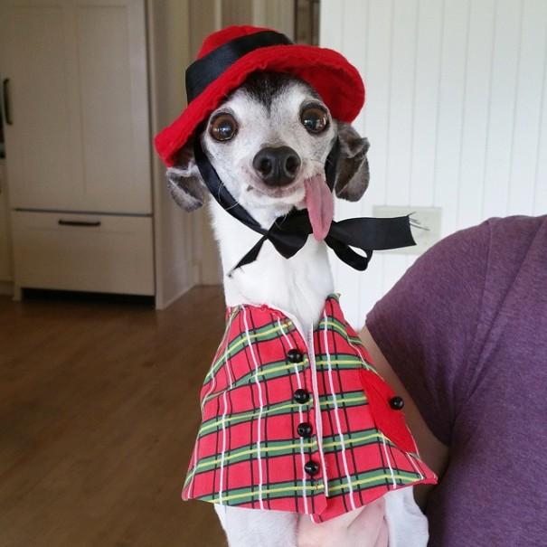 Забавная собака (17 фото)