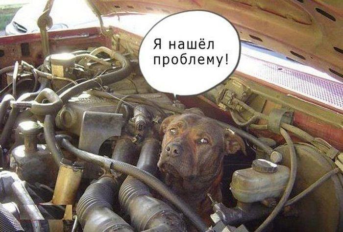 http://trinixy.ru/pics5/20150508/podborka_86.jpg