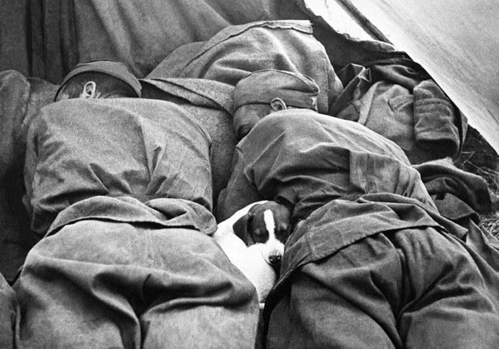 Трогательные фотографии времен Великой Отечественной войны (12 фото)
