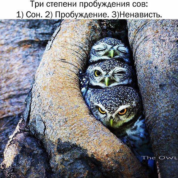 Прикольные картинки (112 фото)