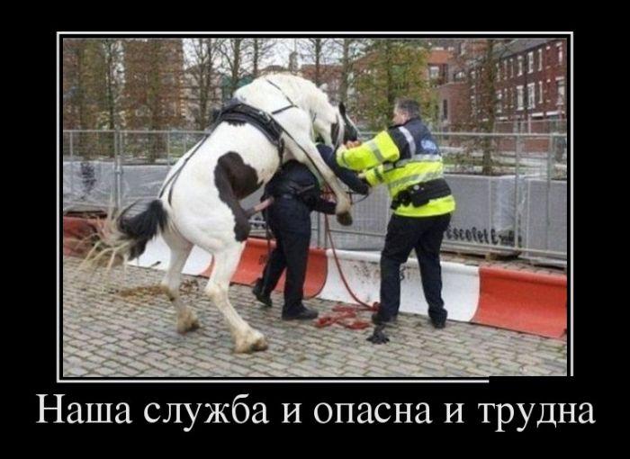 http://trinixy.ru/pics5/20150515/demotivatory_09.jpg