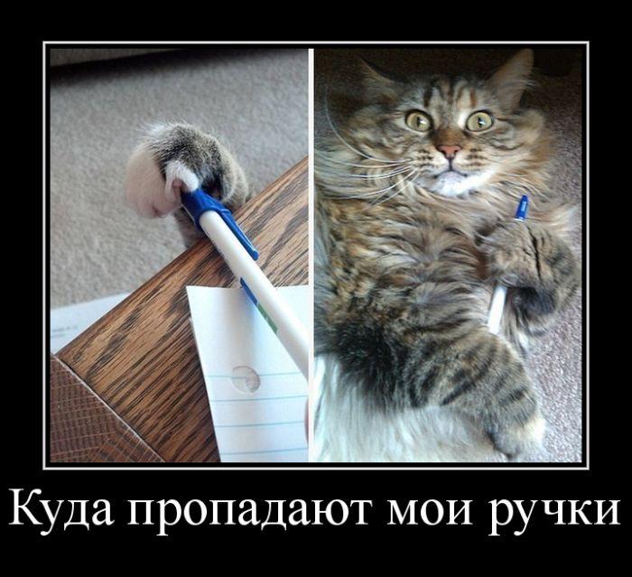 http://trinixy.ru/pics5/20150515/demotivatory_28.jpg