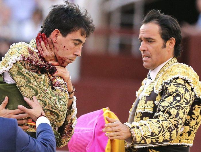 В Мадриде раненный бык поднял на рога матадора (5 фото)