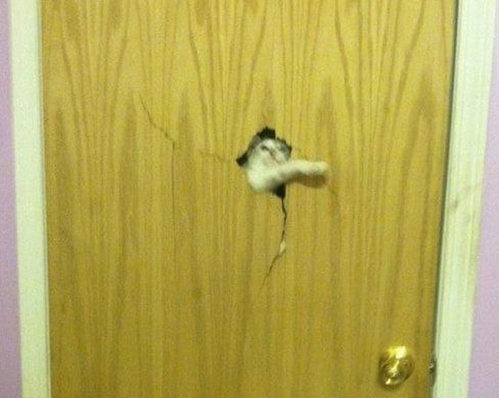 Животные просятся вовнутрь (22 фото)