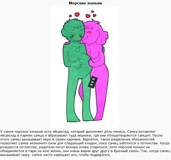 Типы распределения гендерных ролей в животном мире (12 фото)