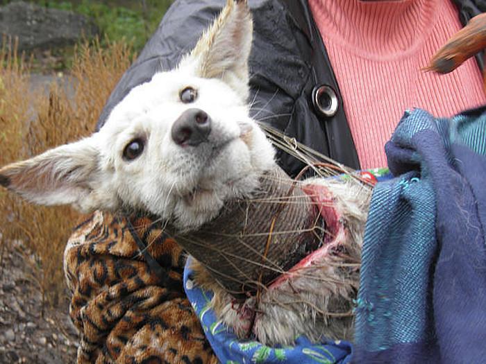 Как спасали собаку по кличке Баночка (20 фото)