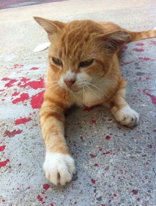 Раненная кошка (4 фото)