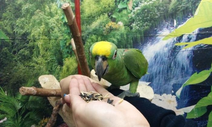 Забавное объявление о продаже попугая (2 фото)