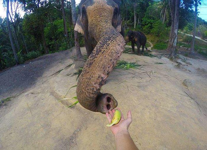 В Таиланде слон сделал селфи на экшн-камеру туриста (4 фото)