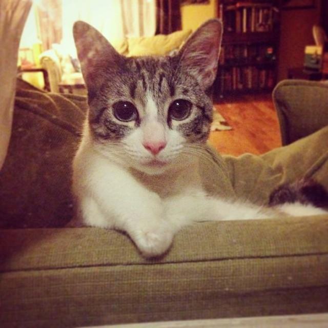 Кошка-инвалид по кличке Ру стала новой звездой Instagram (13 фото)