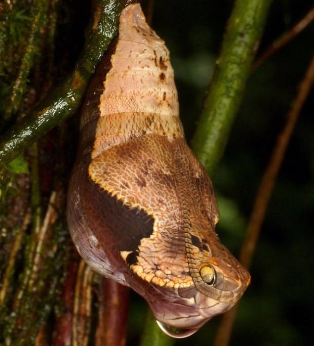 Мастера маскировки в тропическом лесу (4 фото)