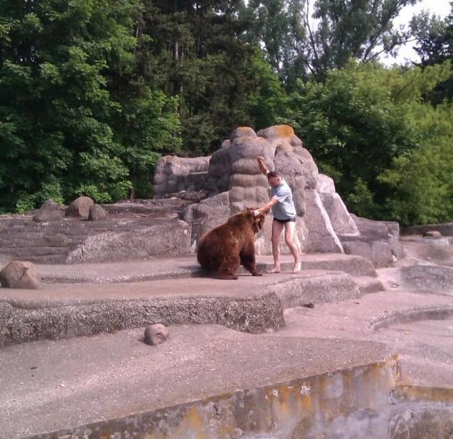 В варшавском зоопарке пьяный мужик залез в вольер к медведице (3 фото)