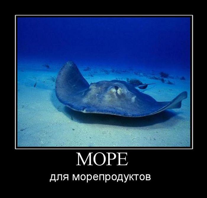 http://trinixy.ru/pics5/20150529/demotivatory_07.jpg