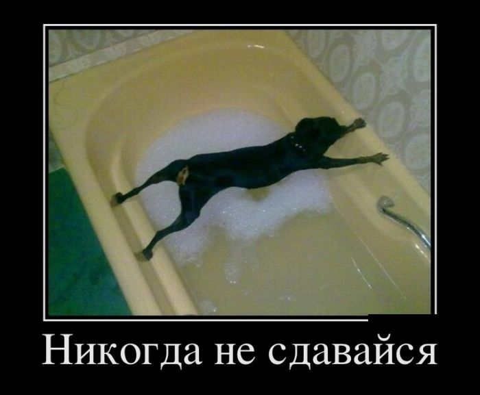 http://trinixy.ru/pics5/20150529/demotivatory_18.jpg