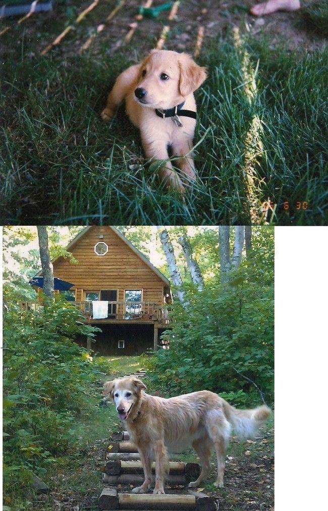 Трогательные фотографии животных (24 фото)