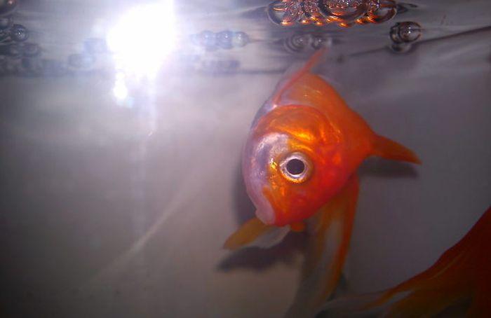 Как парень золотой рыбке помог (2 фото)