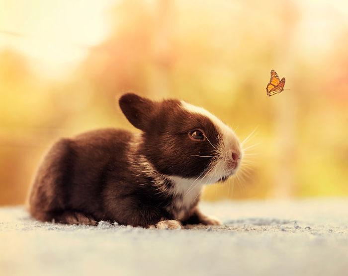 Как меняется кролик, в течение первого месяца жизни (16 фото)