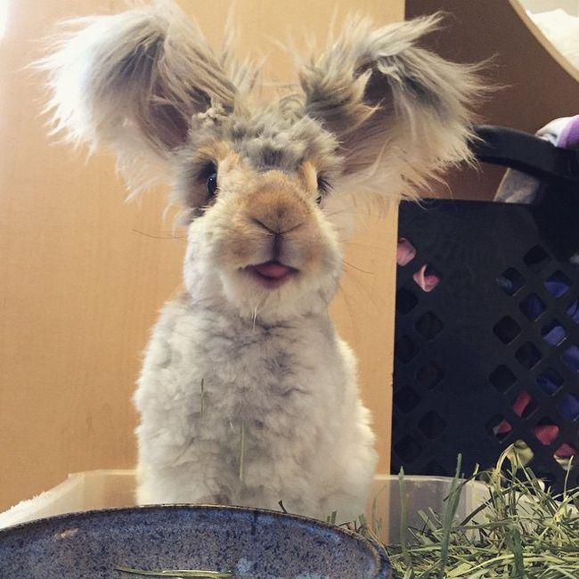 Пушистый кролик стал восходящей звездой Instagram (11 фото)