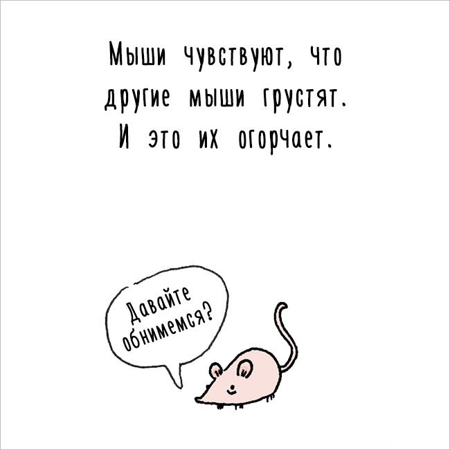 Забавное, интересное, шокирующее - Страница 6 Fakti_o_jivotnih_05