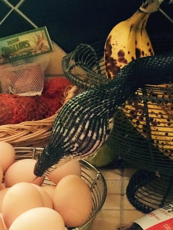 Незваный гость нашел чем полакомиться на кухне (3 фото + видео)