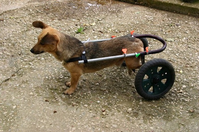 Как мужик собаке помог (18 фото)