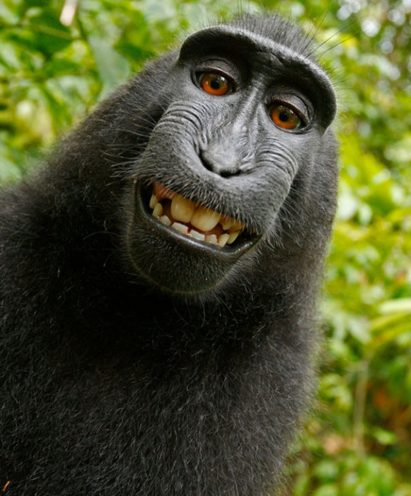 Животные позируют на камеру (42 фото)