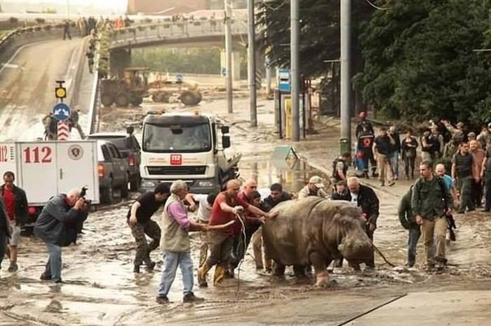 На улицах Тбилиси ищут животных, сбежавших из зоопарка в результате наводнения (19 фото + 2 видео)